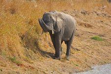 Free Elephant In Sabi Sands Stock Photos - 5568223