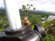 Free Grasshopper Royalty Free Stock Image - 5568646