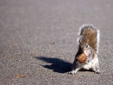 Free Squirrel And Cake Stock Image - 5569261
