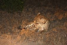 Free Leopard In The Sabi Sands Royalty Free Stock Photo - 5569275