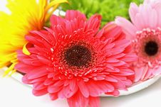 Free Flowers On   White Plate Stock Image - 5569291