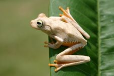 Free Frog On A Leaf Stock Photography - 5569462
