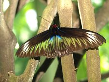 Free Butterfly On A Tree Royalty Free Stock Images - 5569789