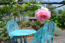 Free Rose And Bench Royalty Free Stock Photo - 55629895