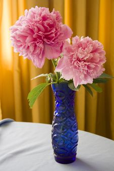 Free Large Pink Peony Flowers Royalty Free Stock Image - 55683436