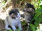 Free Kittens Stock Photo - 55682410