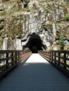 Free Tunnel In A Rock Royalty Free Stock Photo - 5571055