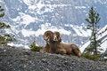 Free Mountain Life Royalty Free Stock Photos - 5571618