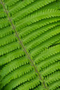 Free Fern Close-up Royalty Free Stock Photography - 5573647