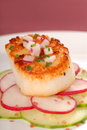 Free Seared Scallop On A Salad Of Cucumber And Radish Royalty Free Stock Images - 5578319