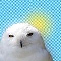 Free White Snowy Owl Stock Photography - 5578632