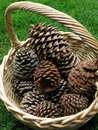 Free Basket Of Cones Royalty Free Stock Photography - 5579327