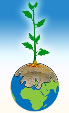 Free Plant Royalty Free Stock Image - 5570656
