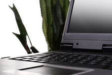 Free Laptop And Plant Stock Photography - 5570822