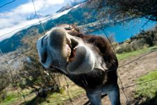 Free Me Donkey Royalty Free Stock Photos