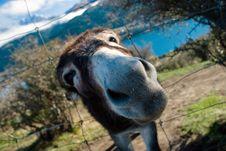 Free Me Donkey Stock Photo