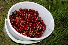 Free Ripe Berries Stock Image - 5571681
