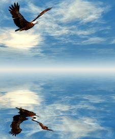 Free Eagle Royalty Free Stock Image - 5572316