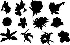 Free Flowers Silhouettes Isolated On White Royalty Free Stock Photos - 5573348