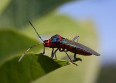 Free Small Colored Insect Royalty Free Stock Image - 5573726