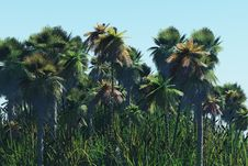 Palm Trees On The Tropical Island Royalty Free Stock Photography