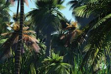 Free Palm Trees On The Tropical Island Royalty Free Stock Photos - 5574488