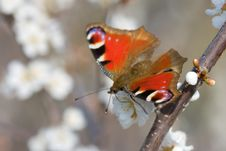 Free Red Butterfly On The Branch Of Tree Vertical Royalty Free Stock Photo - 5574515