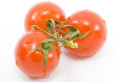 Free Tomatoes Stock Images - 5575874