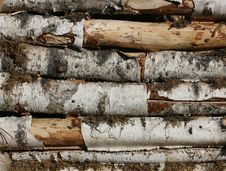 Free Wood Stock Stock Images - 5575944