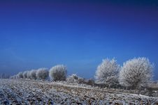 Free Trees In Winter Royalty Free Stock Photography - 5576427