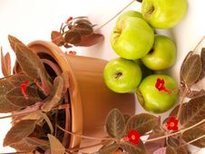 Free Green Apples Stacked Near Red Flowers & Brown Vase Stock Images - 5577254