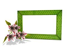 Free Photo Frame In Snake Skin With A Flower Royalty Free Stock Photography - 5577987