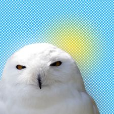 Free White Snowy Owl Stock Photography - 5578632