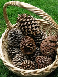 Basket Of Cones Royalty Free Stock Photography