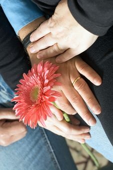 Free Hands Around Flower - Vertical Royalty Free Stock Photo - 5579995