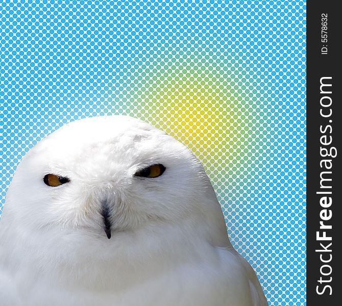 White snowy owl