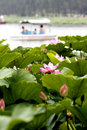 Free Lotus And Boat. Stock Photo - 5587200