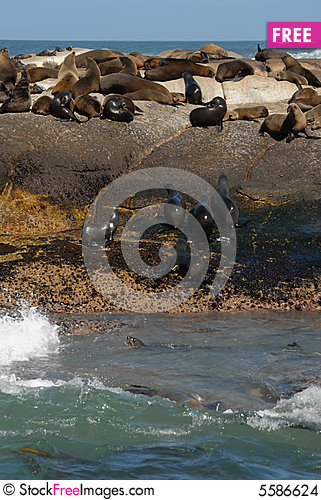 Free Seal Island, South Africa Stock Images - 5586624