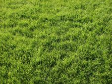 Free Grass Stock Photos - 5582323