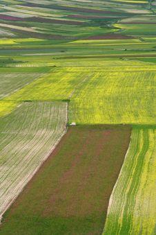 Free Coloured Fields Stock Photo - 5582450