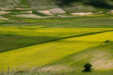 Free Coloured Fields Stock Photography - 5582552