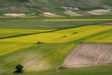 Free Coloured Fields Stock Images - 5582564