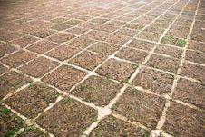 Free Fossilised Rock Floor Royalty Free Stock Photo - 5584805