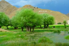 Free The Meadow Of Tibet Stock Image - 5584831