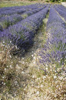 Free Provence Royalty Free Stock Image - 5585776