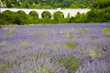 Free Provence Stock Images - 5585804