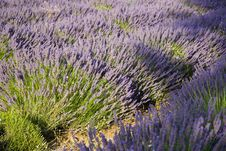 Free Provence Royalty Free Stock Photos - 5585978