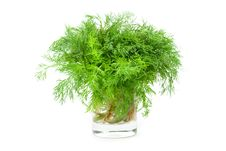 Free Green Dill In A Glass Royalty Free Stock Photos - 5586218