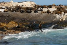Free Seal Island, South Africa Stock Image - 5586551