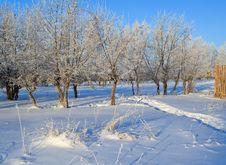 Free Winter Landscape Stock Photo - 5586800